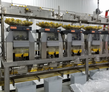 HPP Orange Juice Co-packing